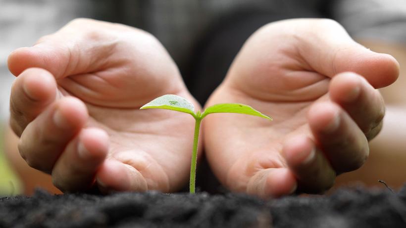Agro, uzgajanje, poljoprivreda, njegovanje, autohtona kultura
