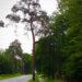 Drvo pozdravlja kao vojnik