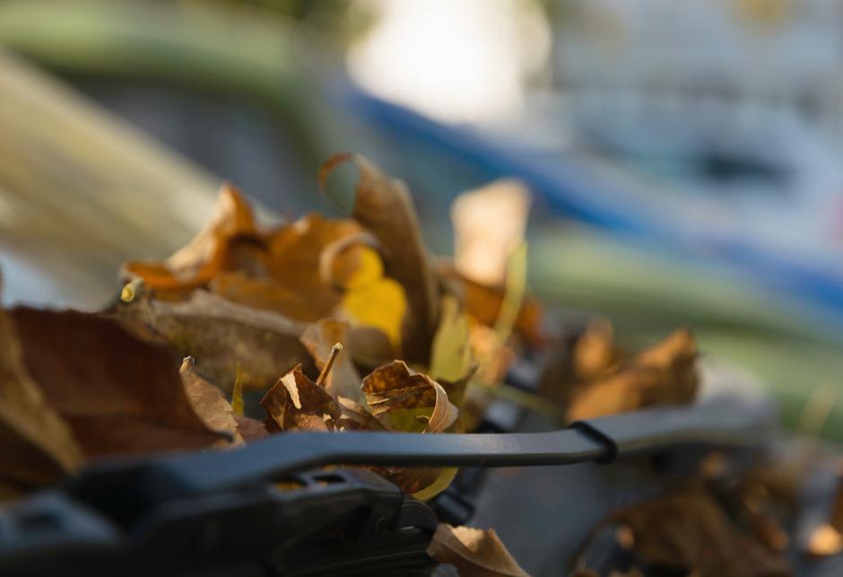 lisce jesen