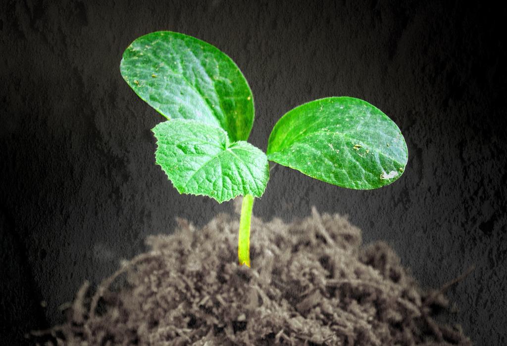 biljka - zemlja