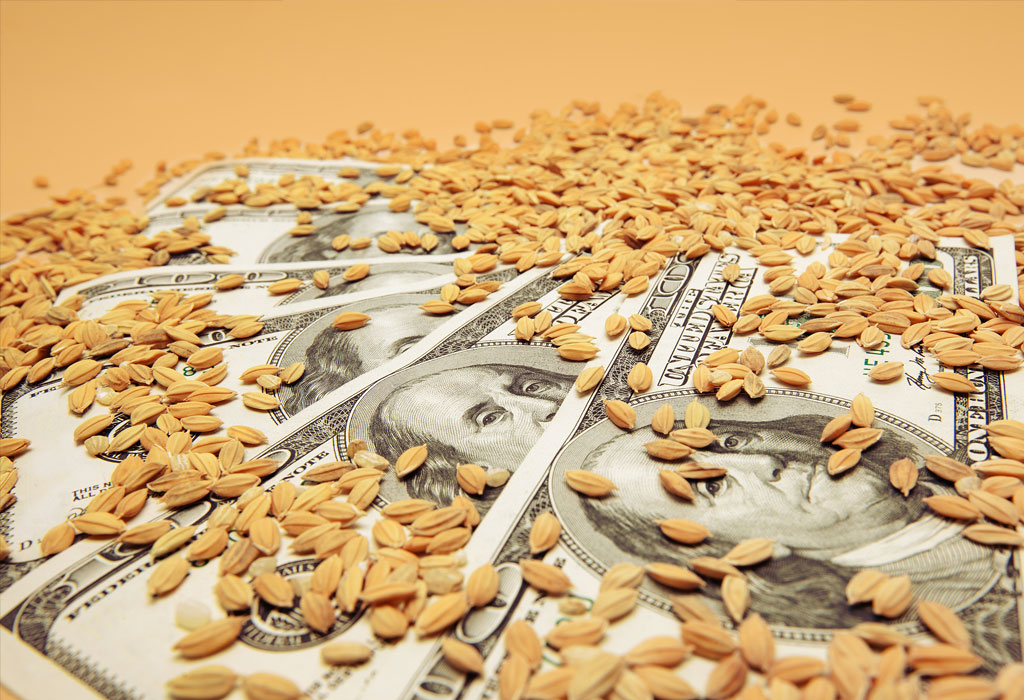 Pšenica - Rusija - izvoz