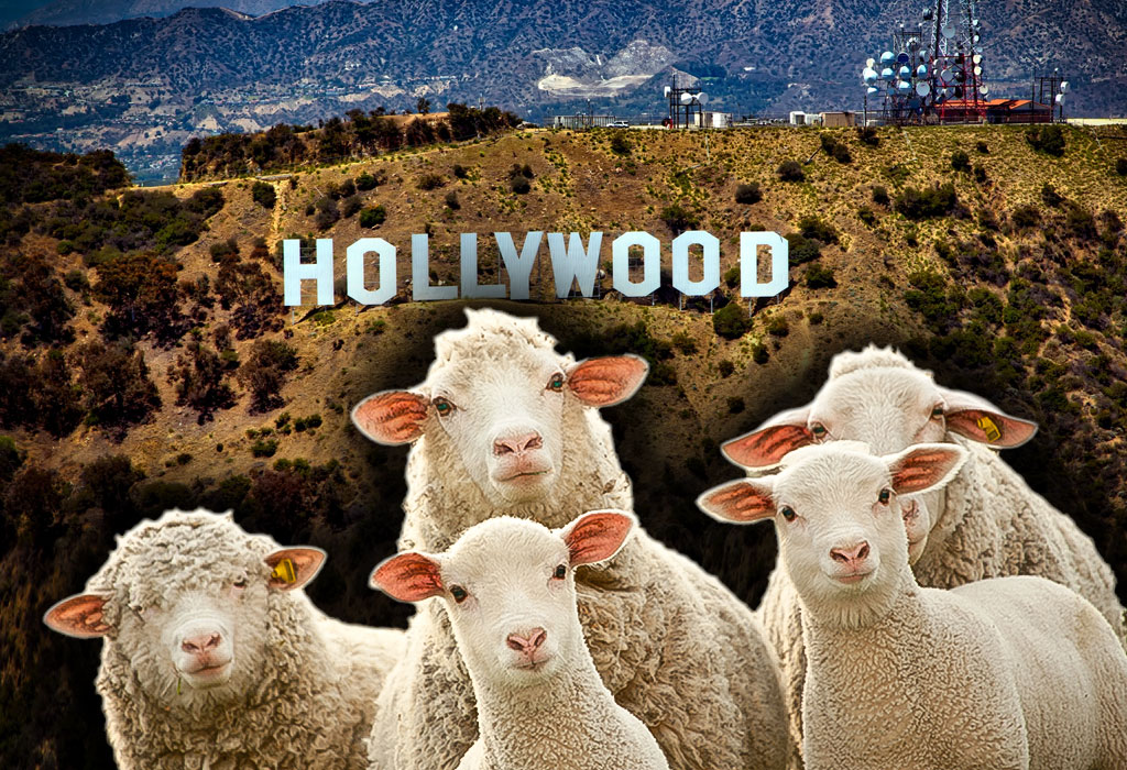 Hollywood i ovce